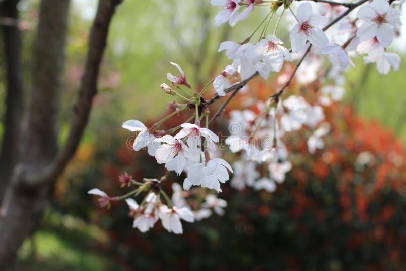 春天在兖州 免版税库存照片