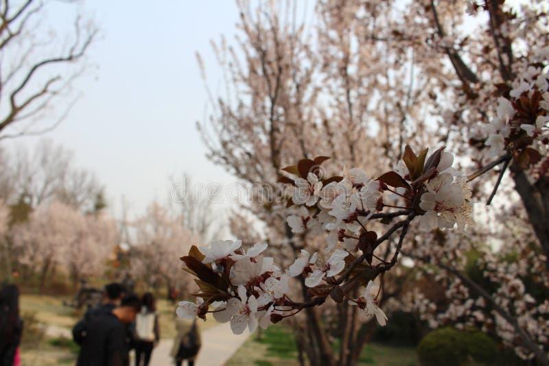 春天在兖州 库存照片