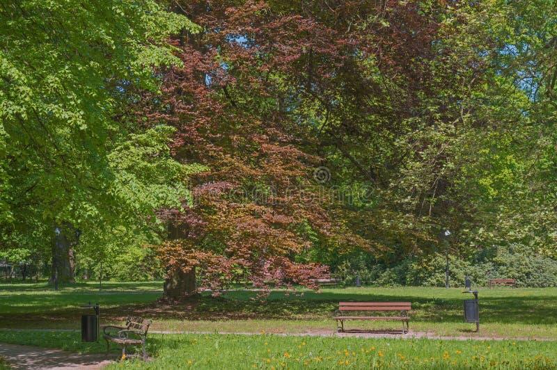 春天在公园 库存照片