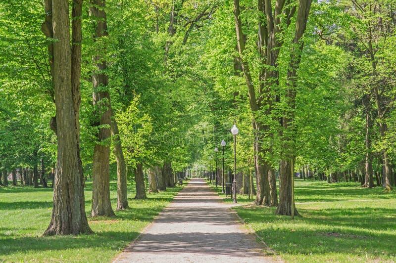 春天在公园 免版税库存照片