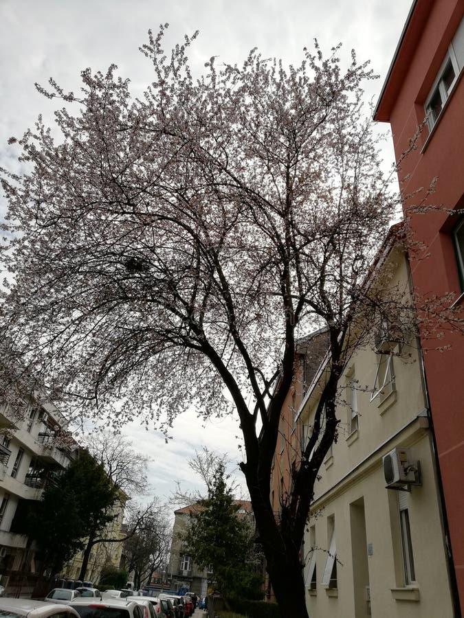 春天在城市 免版税库存照片