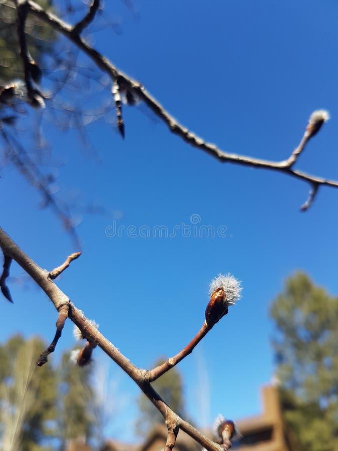 春天在天空中 库存图片