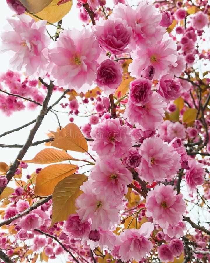 春天在奥斯陆 免版税库存照片