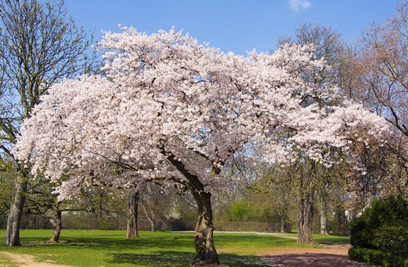 春天在德国 图库摄影