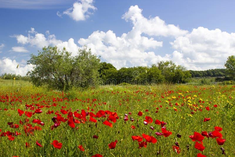 春天在托斯卡纳 免版税库存照片