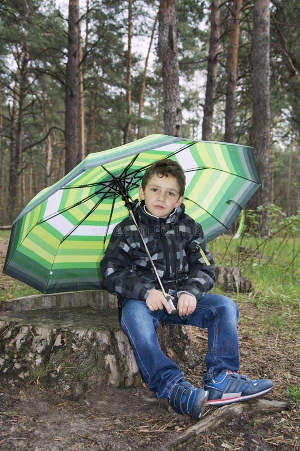 春天在树桩的森林坐男孩在伞下 免版税库存照片