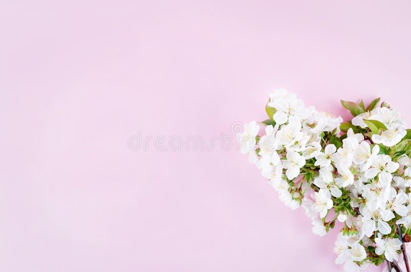 春天在浅粉红色的背景的樱桃花 库存图片