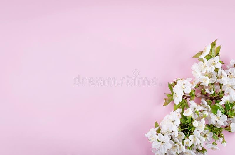 春天在浅粉红色的背景的樱桃花 免版税库存照片