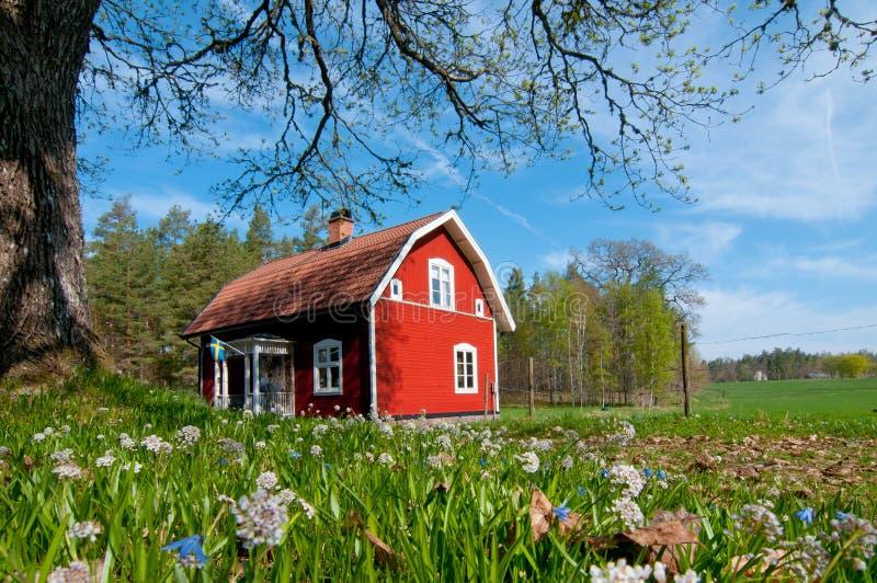 春天在瑞典 免版税库存照片
