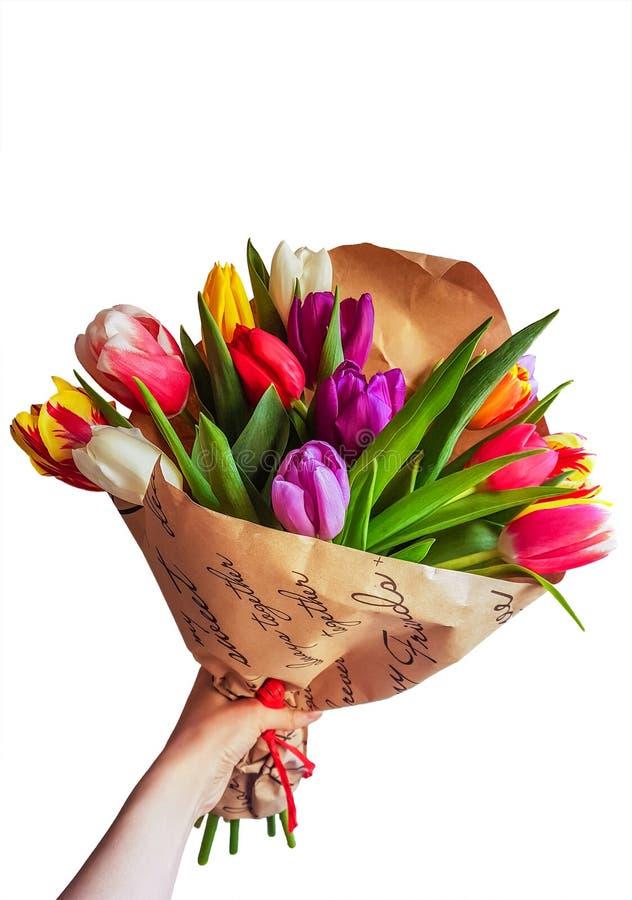 春天在白色背景隔绝的郁金香花花束  图库摄影