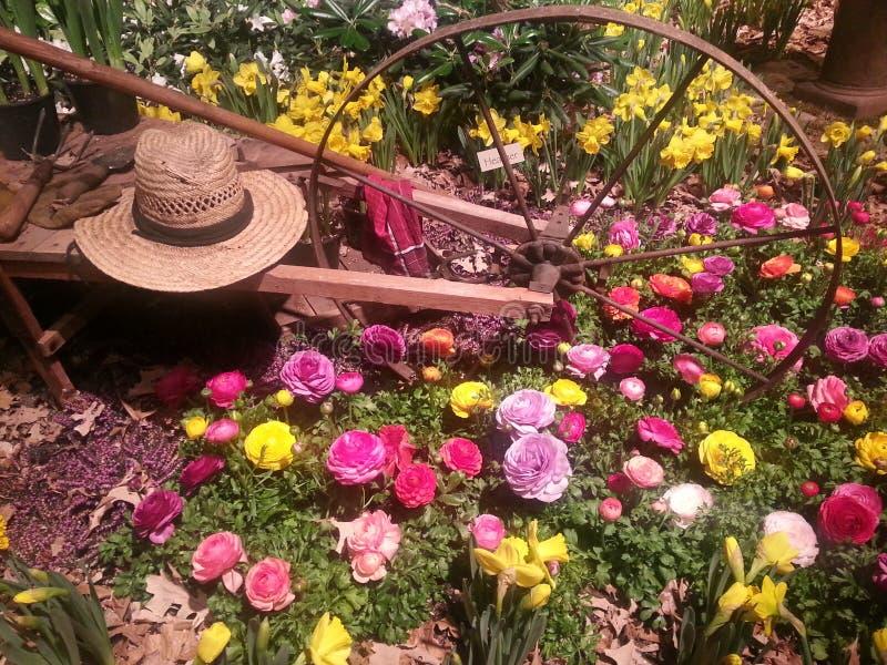 春天在米尼亚波尼斯 免版税库存图片