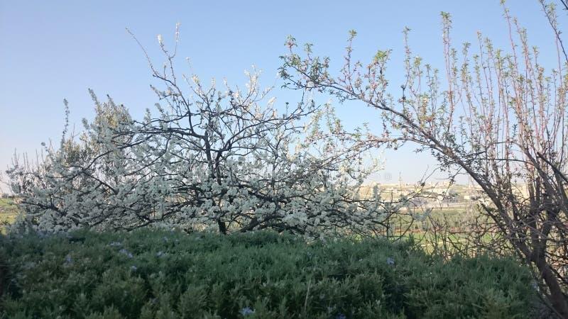 春天在约旦 免版税库存图片