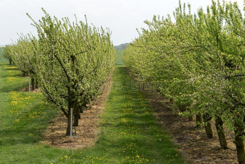 春天在苹果树背景中 库存照片