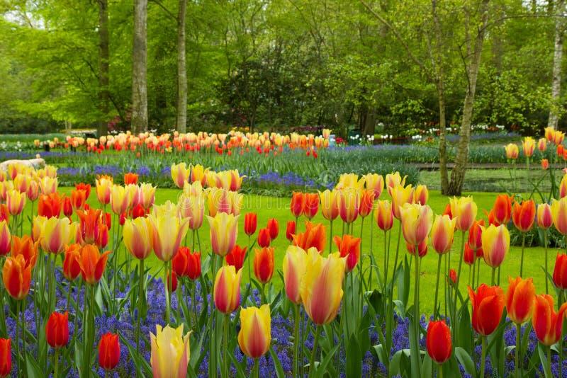 春天花在Keukenhof庭院里 免版税库存照片