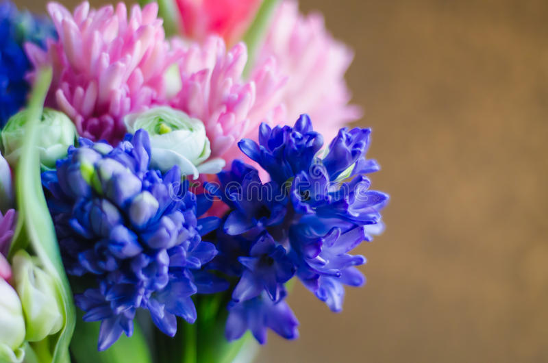 春天在软花束的宏指令的花风信花 图库摄影