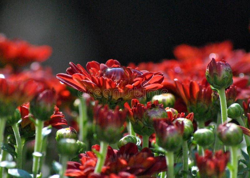 春天在雨以后的夏天绽放 库存照片