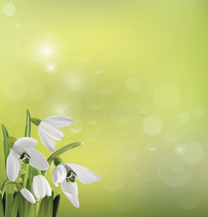 春天在绿色背景的snowdrop花 免版税图库摄影