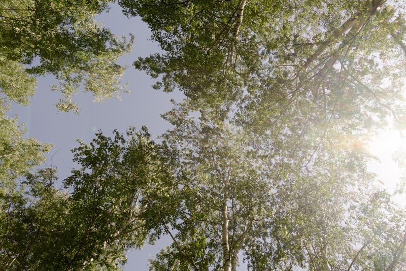 春天城市公园 库存照片