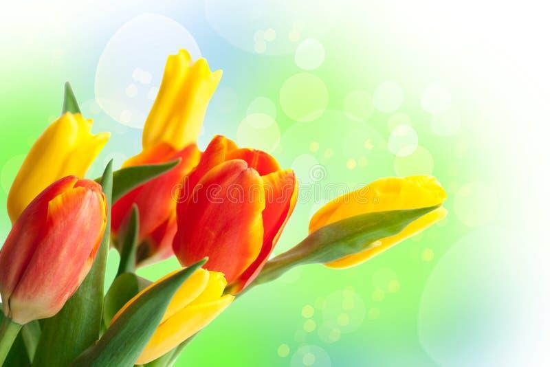 春天复活节花背景 春天假日 免版税库存照片