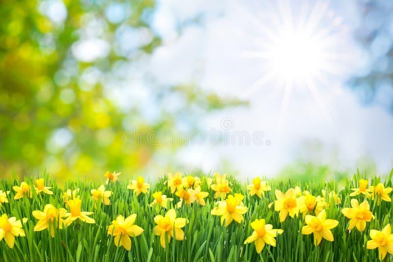 春天复活节背景 库存图片