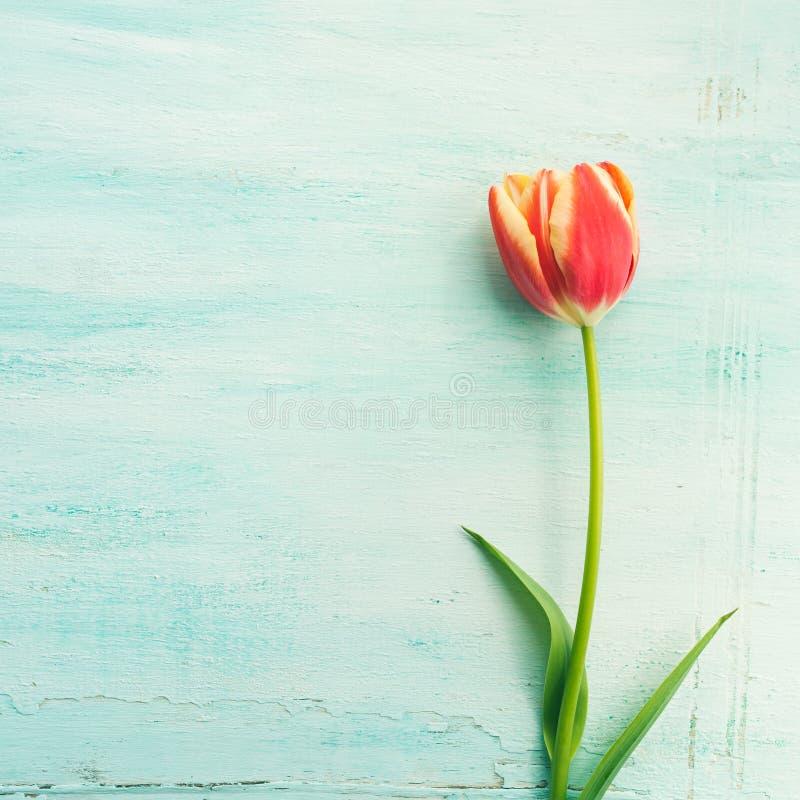 春天复活节郁金香花卉最小的淡色背景 免版税库存照片
