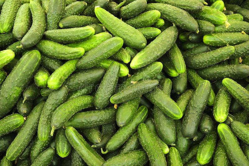 春天夏天戒毒所果菜类饮食 关闭收获堆 干净和发光的蔬菜/水果assor超级市场立场  免版税库存图片