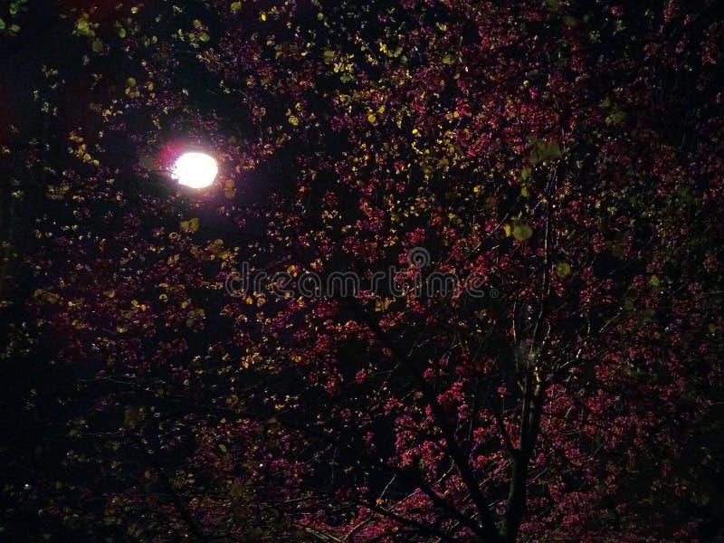 春天夜 库存照片