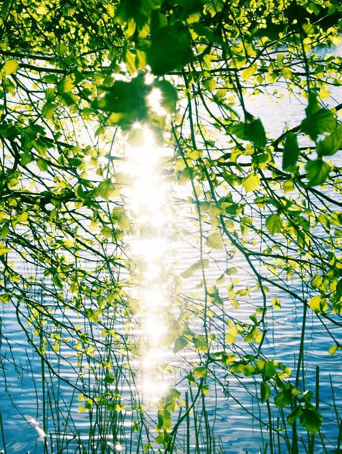春天天空和绿色年轻叶子 免版税库存照片