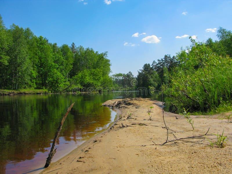 春天太阳不可思议的明亮的森林美丽的晴朗的蓝天河 免版税库存照片