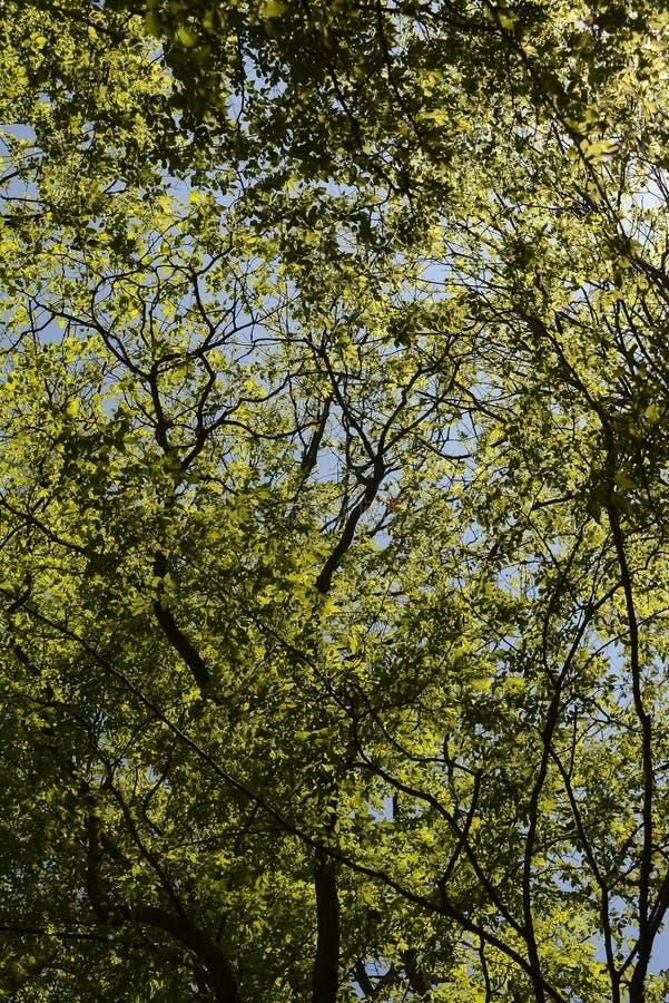 春天太阳光亮的低谷绿色树冠 免版税库存图片