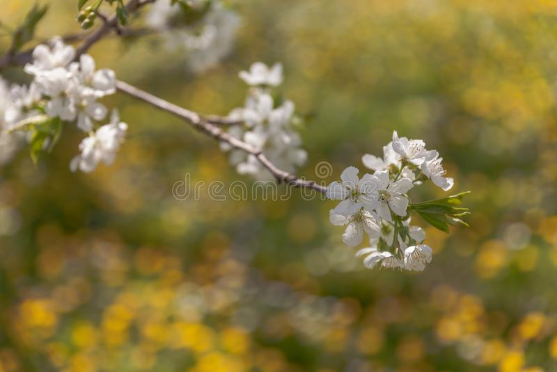春天小垫布 库存照片