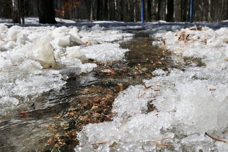 春天小河流程在熔化的雪中的森林里 库存图片