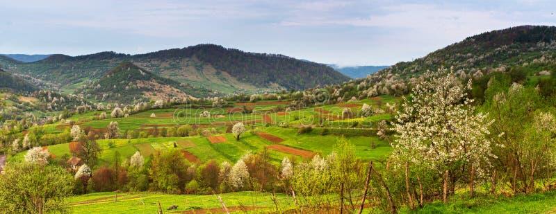 春天山全景风景 与开花的树的谷 免版税库存照片