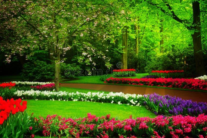 春天庭院在Keukenhof,荷兰 免版税库存照片