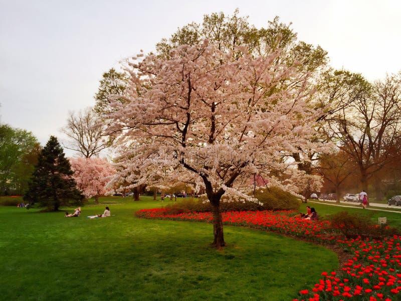 春天庭院 库存照片