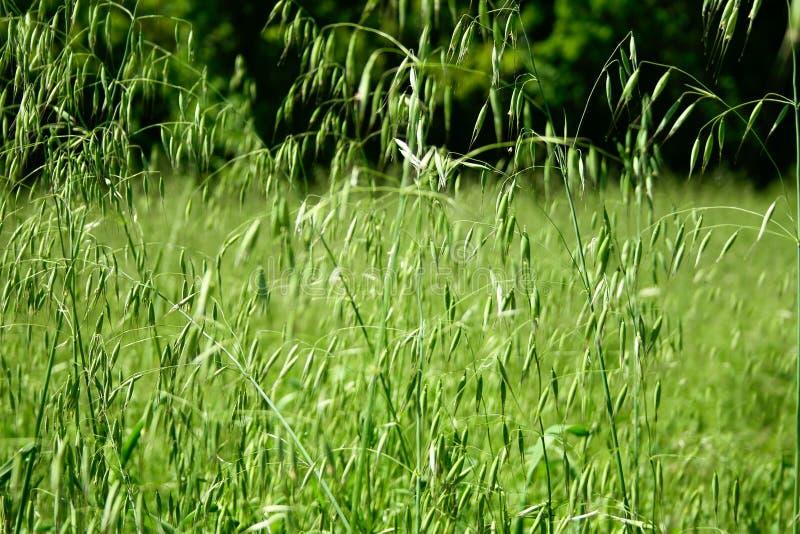 春天开始植物增长 免版税库存照片