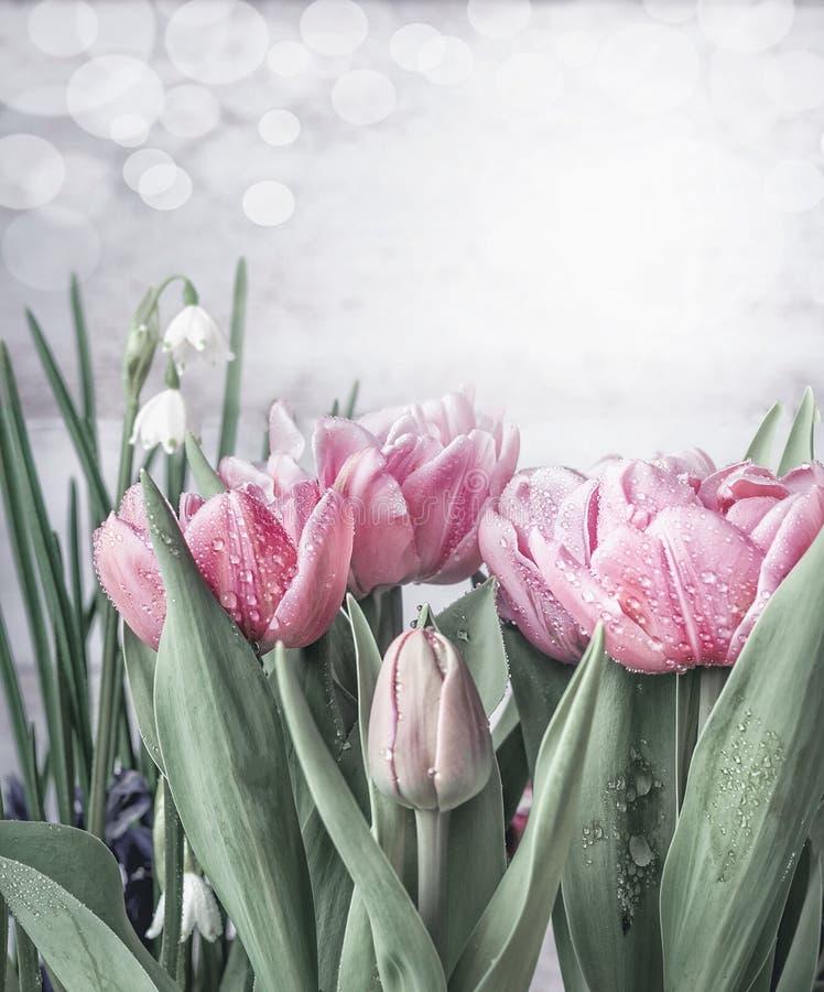 春天开花与郁金香和snowdrops的背景在与bokeh的白色木墙壁背景 春天自然概念 免版税库存图片