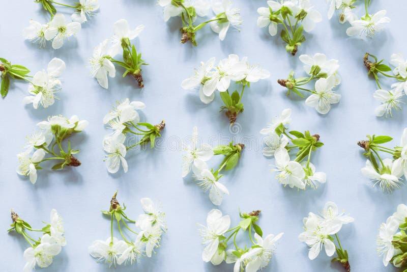 春天开花样式 免版税库存照片