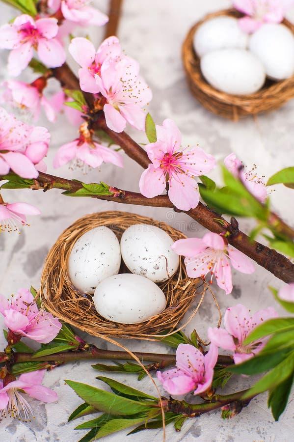 春天开花概念 复活节概念、鸡蛋在巢,开花的树特写镜头和拷贝空间 自然fl桃红色自然纹理  图库摄影