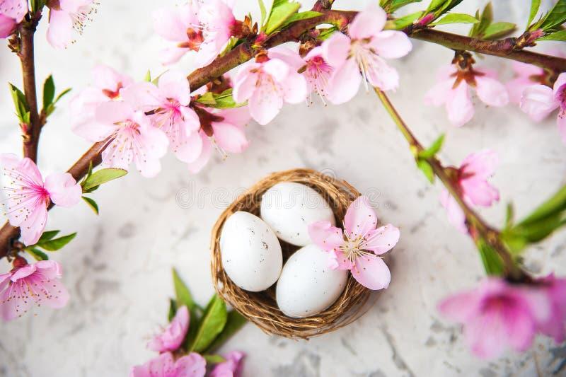 春天开花概念 复活节概念、鸡蛋在巢,开花的树特写镜头和拷贝空间 自然fl桃红色自然纹理  免版税图库摄影