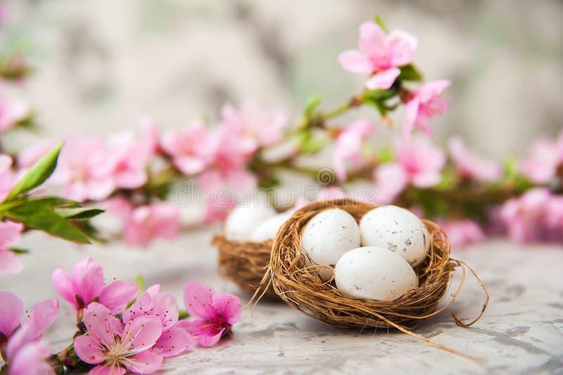 春天开花概念 复活节概念、鸡蛋在巢,开花的树特写镜头和拷贝空间 自然fl桃红色自然纹理  库存图片