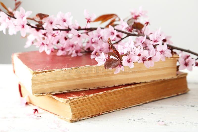 春天开花的分支 免版税库存照片