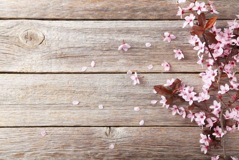 春天开花的分支 库存图片