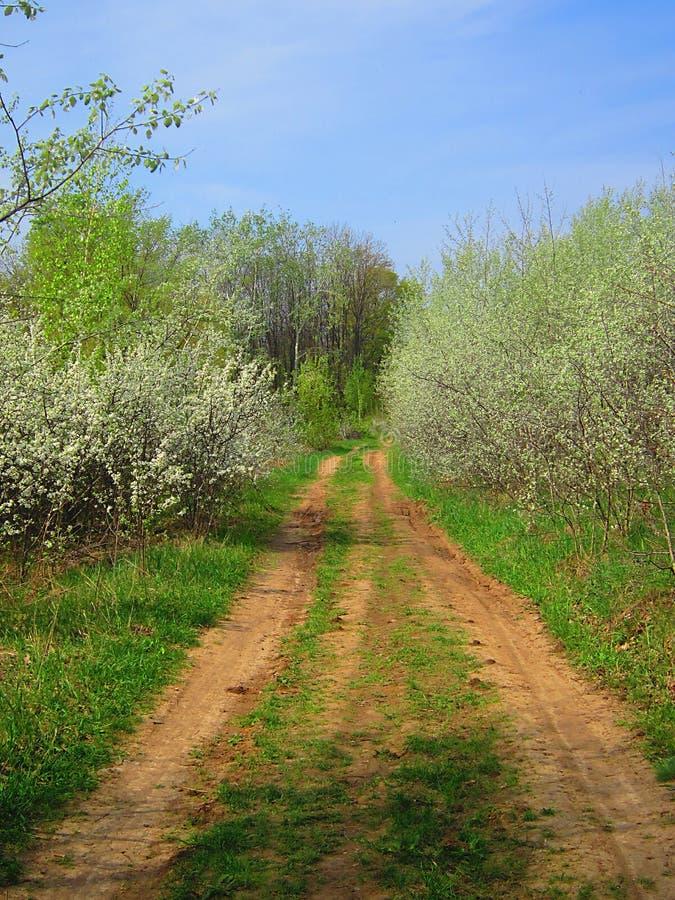 春天开花的灌木在森林里 库存图片