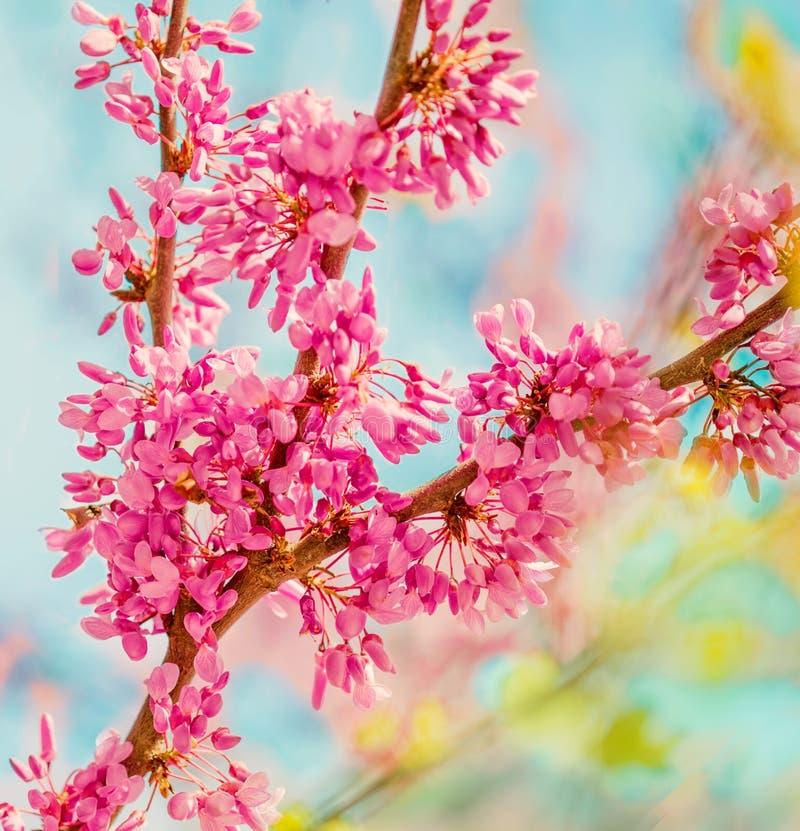 春天开花背景 在自然backgroun的开花的树 免版税库存照片