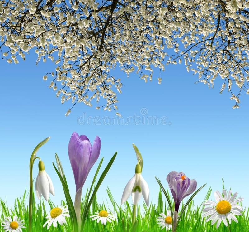 春天开花snowdrops、番红花和雏菊 库存照片