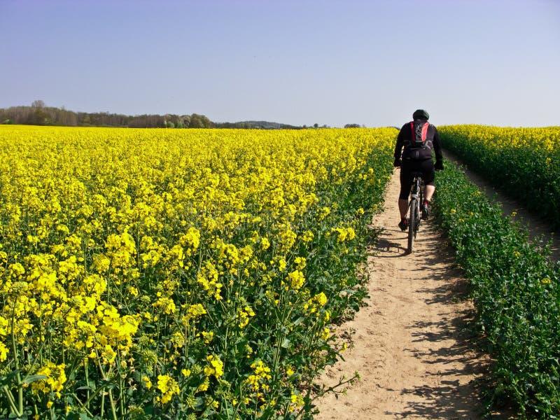 春天循环 免版税库存照片