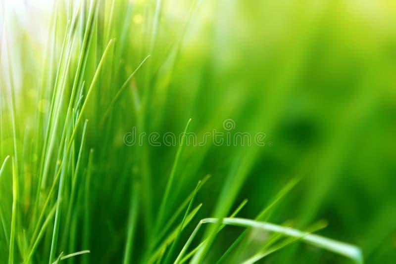 春天或与绿草的夏天背景 免版税图库摄影