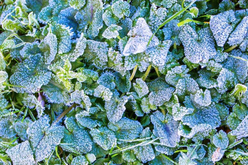 免版税  download preview 春天或冬天草和花卉背景 霜和雪在绿草在