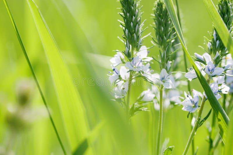 春天或夏天抽象自然背景 图库摄影
